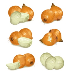 Set of onion vector