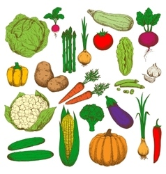Retro colored sketched vegetables for food design vector