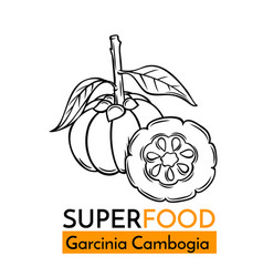 Icon superfood garcinia cambogia vector