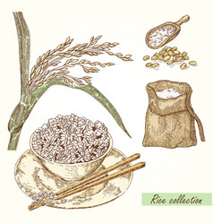 Rice set hand drawn of rice vector