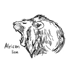 Yawning african lion vector