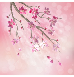 Spring tree branch cherry blossom flowers vector