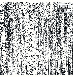 Birch forest texture vector