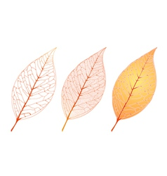 Autumn orange leaf set vector