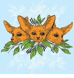 Fennec fox faces vector