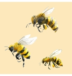 Watercolor hand drawn bees vector image