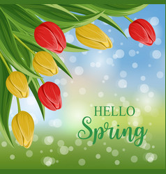 hello spring banner with blooming tulip vector image