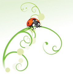 ladybird curves vector image vector image