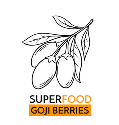 icon superfood goji berry vector image