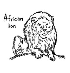 African lion sketch hand drawn vector