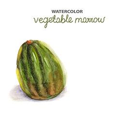 Background with watercolor marrow vector