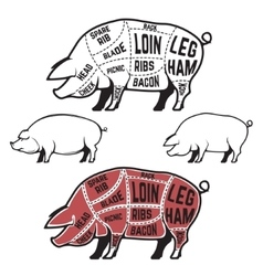 Butcher diagram scheme and guide - pork cuts vector