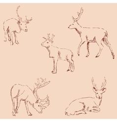 Deer sketch pencil drawing by hand vintage vector