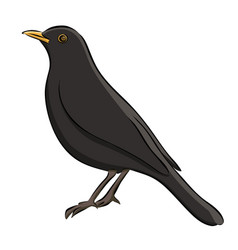 Hand drawn blackbird sketch vector
