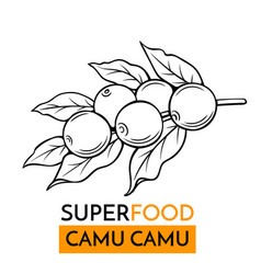 Icon superfood camu camu vector