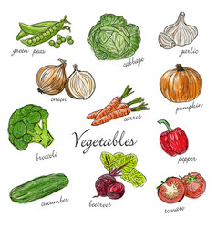 Types of fresh vegetables with description vector
