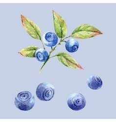 Watercolor hand drawn blueberries vector