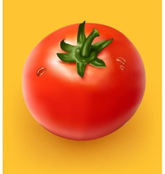 Figure ripe tomato on yellow background vector