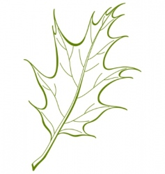 leaf of oak iberian vector vector image