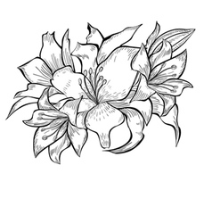 Black and white of Lily flowers vector image vector image