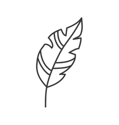 Feather plume vintage decoration icon vector