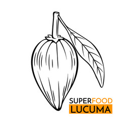 Icon superfood lucuma vector
