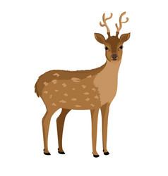 Reindeer animal isolated icon vector
