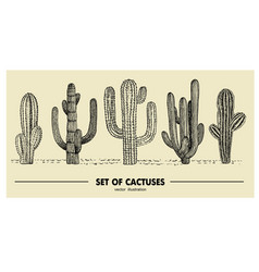 Set of hand drawn cactus sketch vector