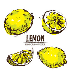 Digital detailed color lemon hand drawn vector