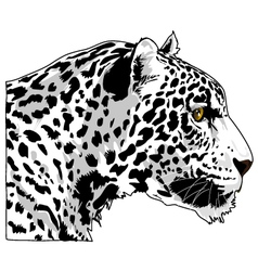 White cougar head art vector