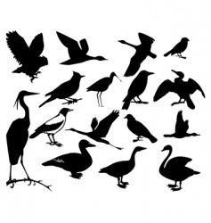 Collection of silhouettes of birds vector