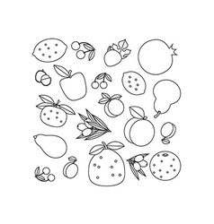 Composition of fruits vector