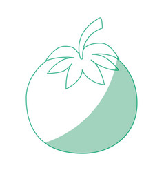 isolated cute tomato vector image vector image