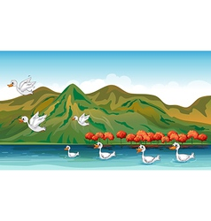 Ducks in quest of food vector