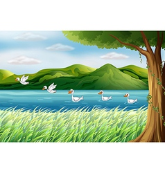 Flying pond ducks vector image vector image