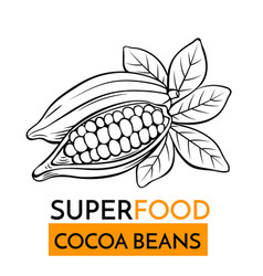 Icon superfood cocoa beans vector