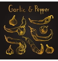 Garlic and pepper set vector