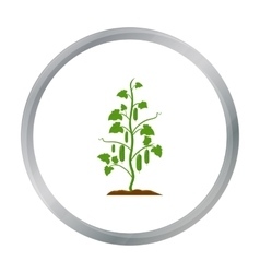 Cucumber icon cartoon single plant icon from the vector