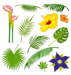 Tropical jungle leaves and flowers set vector image