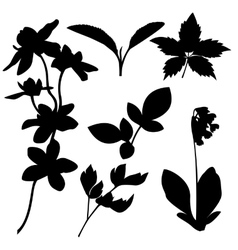Set of botanical silhouettes vector image vector image