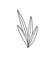 Natural leaves foliage flora outline vector