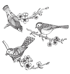 Set of hand drawn ornate birds on sakura flower vector