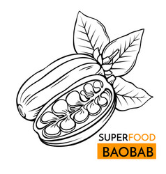 icon superfood baobab vector image vector image