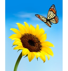 Nature background with sunflower and butterfly vector image