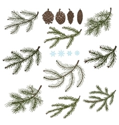 Spruce branches with pine cones set vector
