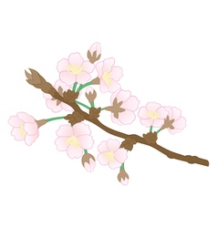Abstract apple tree branch vector
