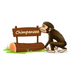 Cartoon zoo chimpanzee sign vector