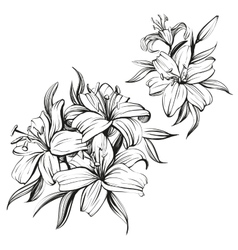 floral blooming lilies set hand drawn vector image vector image
