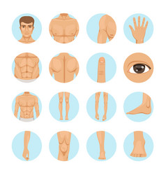 human different parts of man body vector image