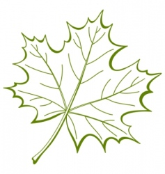 Leaf of a maple vector vector